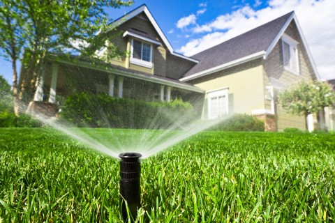 Lawn and sprinkler