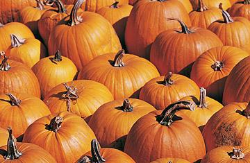 360_nf_pumpkin_0920