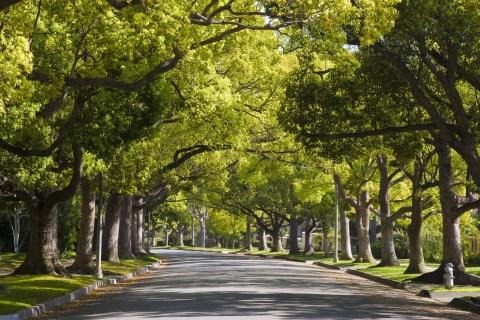 The leafy suburbs