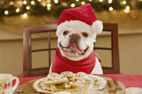 Dog in Santa hat with cookies