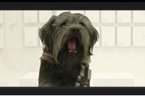VW Stars Wars dog