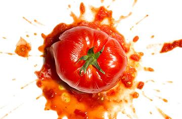 360_eco_tomato_0720