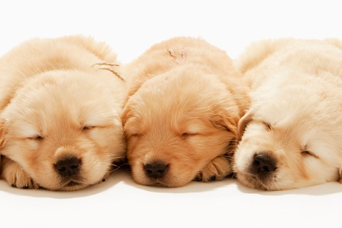 10_dogs