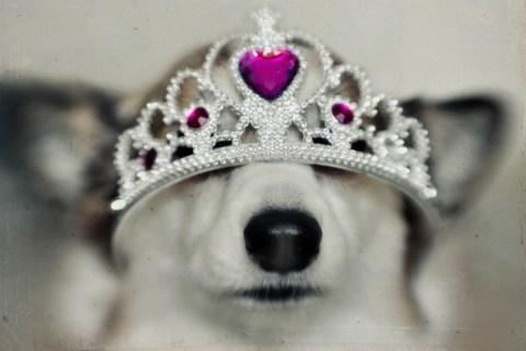 Dog in princess tiara